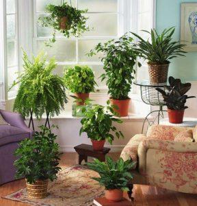 plante feng shui salon